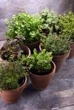 Herbes du cru et aromatiques dans de vieux pots d'argile Image stock