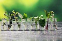 Herbes du cru et aromatiques en verre Image libre de droits