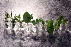 Herbes du cru et aromatiques en verre Image stock
