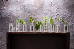 Herbes du cru et aromatiques en verre Photo libre de droits