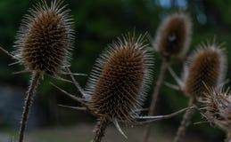 Herbes en automne Photographie stock