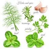 Herbes et épice Photos libres de droits