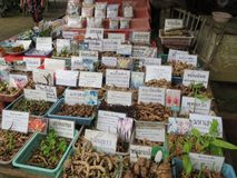 Herbes et épice thaïlandaises du nord de la Thaïlande Images libres de droits