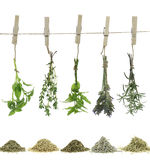 Herbes et épices Image stock