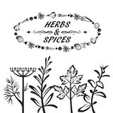Herbes et épices Photo stock