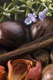 Herbes et épices aromatiques image stock