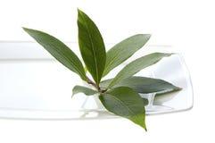 Herbes et épices fraîches. feuille de laurier Image stock