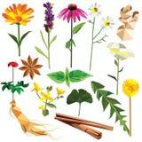 Herbes et épices réglées illustration stock