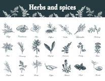 Herbes et épices réglées Plantes médicinales d'officinale tiré par la main ou Image libre de droits