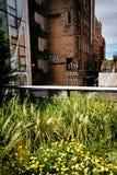Herbes et bâtiment suivant la ligne élevée, Manhattan, New York Photos stock