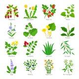 Herbes et fleurs médicales d'Aromatherapy illustration stock