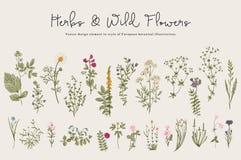 Herbes et fleurs sauvages illustration stock