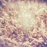 Herbes et fleurs sauvages, paysage de pays de fin d'été image libre de droits