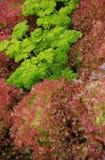 Herbes et jardin de laitue Photographie stock libre de droits