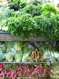 Herbes et racines alimentaires de racines Photographie stock