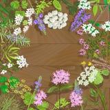 Herbes fleurissantes sur le fond en bois Images libres de droits