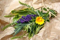 Herbes fraîches Images libres de droits