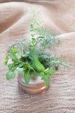 Herbes fraîches Photographie stock libre de droits