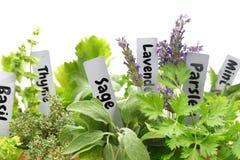 Herbes fraîches Photos stock