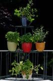 Herbes fraîches dans des bacs Photographie stock libre de droits