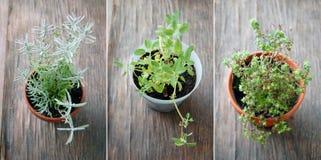 Herbes fraîches dans des pots de fleur sur la table en bois Image stock