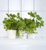 Herbes fraîches dans la cuisine Photographie stock libre de droits