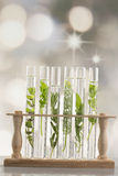Herbes fraîches dans le tube à essai photographie stock libre de droits
