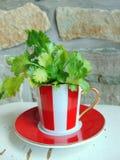 Herbes fraîches de coriandre dans une belle tasse rayée rouge et blanche photos stock