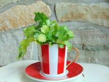 Herbes fraîches de coriandre dans une belle tasse rayée rouge et blanche photographie stock