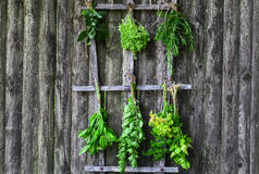 Herbes fraîches de séchage Photo libre de droits