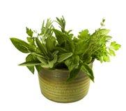 Herbes fraîches en poterie Photos libres de droits