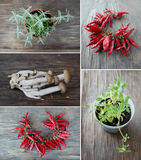 Herbes fraîches en pots de fleur et poivre de piments Image libre de droits