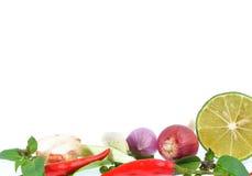 Herbes fraîches et épices d'isolement sur le fond blanc Photographie stock libre de droits