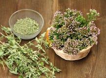 Herbes fraîches et sèches Photo stock