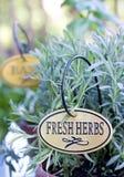 Herbes fraîches plantées dans le bac Photo stock