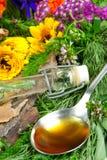 Herbes fraîches pour la médecine de fines herbes Photographie stock libre de droits