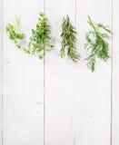 Herbes fraîches sur le fond en bois photos libres de droits