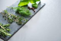Herbes fraîches sur une ardoise Images stock