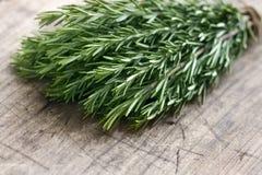 Herbes fraîches vertes de romarin image stock