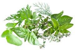 Herbes fraîches vertes sur un blanc Photo libre de droits