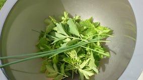 Herbes frais sélectionnées Image libre de droits