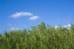 Herbes grandes Photographie stock