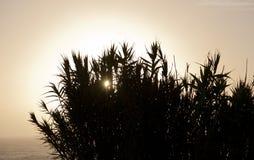 Herbes grandes, coucher du soleil atlantique Photographie stock