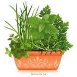 herbes italiennes de +EPS dans le planteur de terre cuite Photo libre de droits