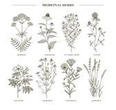 herbes médicinales illustration de vecteur