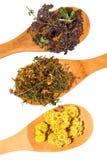 Herbes médicinales. image stock