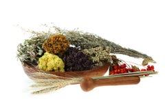 Herbes médicinales image stock