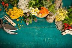 Herbes médicinales fraîches d'été sur le fond en bois image stock