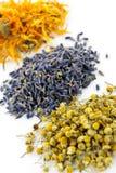 Herbes médicinales sèches Image stock