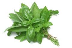 Herbes mélangées de série d'herbe Image stock